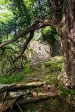 Guardando dopo un albero ha rovinato il castello di Inveruglas immagine stock libera da diritti
