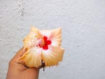 Guardando a flor imagem de stock