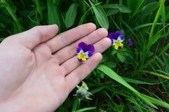 Guardando flores imagens de stock