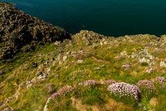 Guardando giù la costa scoscesa con il rosa di mare Fotografie Stock Libere da Diritti
