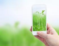 Guardando o telefone esperto contra o fundo do verde da mola Imagens de Stock Royalty Free