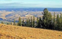 Guardando oltre gli alberi sempreverdi nella valle di Wallowa Fotografie Stock