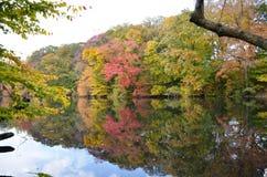 Guardando oltre il lago fall Fotografia Stock Libera da Diritti