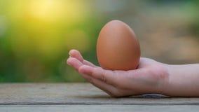 Guardando ovos marrons à disposição fotografia de stock royalty free