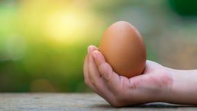 Guardando ovos marrons à disposição fotografia de stock