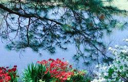 Guardando tramite i fiori ed il pino in un parco ad acqua blu in primavera con i baccelli del seme che galleggiano in  immagine stock libera da diritti