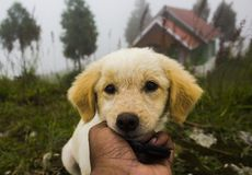 Guardando um cachorrinho bonito em um dia nevoento fotos de stock