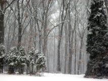 Guardandolo nevicare Immagini Stock