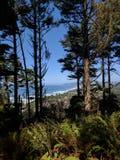 Guardare dall'alto in basso la costa dell'Oregon attraverso gli alberi Fotografie Stock Libere da Diritti