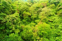 Guardare dall'alto in basso la foresta fotografia stock