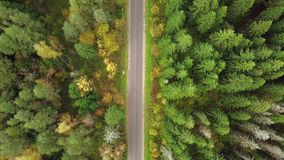 Guardare dall'alto in basso strada in foresta dei colori strabilianti di autunno, splendore di caduta, cavalcavia aerea Vista di  archivi video
