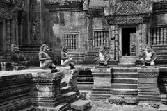 Guardas del mono Fotos de archivo libres de regalías