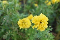 Guarde la calma y ame la flor Fotografía de archivo