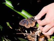Guarde la mariposa de Brown Imagen de archivo libre de regalías