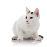 The guarded white cat with yellow eyes. On a white background stock photo