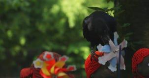 Guardião da estátua que veste o chapéu vermelho e o corvo preto no dia do Tóquio vídeos de arquivo