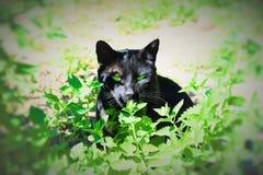 Guardião do jardim imagem de stock royalty free
