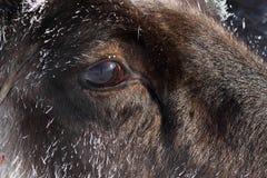 Guardi di un cervo Immagine Stock Libera da Diritti