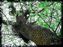 Guardi sotto un albero in primavera Fotografia Stock Libera da Diritti