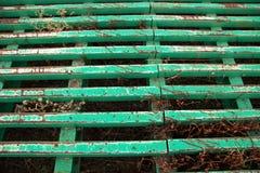 Guardia de ganado verde Fotos de archivo libres de regalías