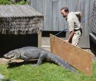Guardia del parque zoológico de Granby foto de archivo