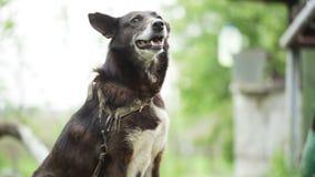 Guardia Dog almacen de metraje de vídeo