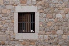 Guardia Dog Immagini Stock