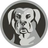 Guardia Dog Head Circle di Rottweiler in bianco e nero Fotografia Stock Libera da Diritti