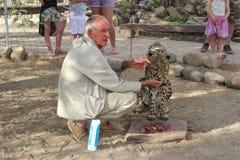 Guardia forestale che alimenta ghepardo selvaggio, Namibia Fotografia Stock Libera da Diritti