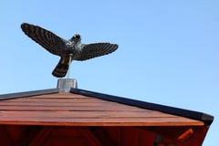 Guardia simulado del pájaro fotos de archivo