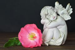 Guardian angel and poppy flower. Guardian angel and pink poppy flower Royalty Free Stock Photography