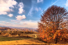 Guardian. Autumn view from Cluj Napocas hills over the Apuseni mountains Stock Photography