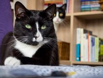 Guardian Cat Angel royalty free stock image