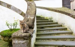 The guardian of the entrance royalty free stock photos