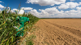 Scarecrow in the fields of Vexin Français Royalty Free Stock Photography
