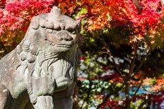 Guardian lion. Close up shot of Japanese guardian lion stock images