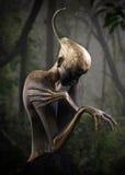 Guardiano della foresta Fotografie Stock Libere da Diritti