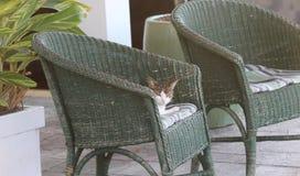 Guardiano della sedia Immagine Stock