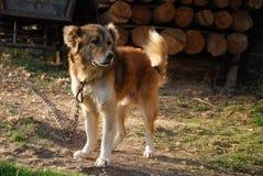 Guarding dog Stock Photo