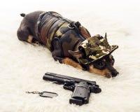 Guarding ranger dog Royalty Free Stock Photography