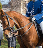 Guards patrolling on horseback. Brown horse with tricolor ribbon on his head. Stock Images