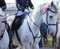 Guards patrolling on horseback. White horse with tricolor ribbon on his head. Stock Images