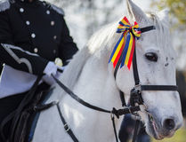 Guards patrolling on horseback. White horse with tricolor ribbon on his head. Royalty Free Stock Photo