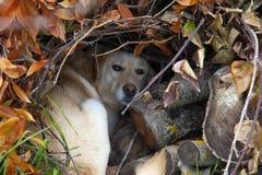 Guarida creada por el perro asustadizo, para sentir más seguro imagenes de archivo
