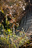 Guarida de las arañas Imagen de archivo libre de regalías