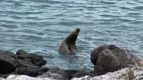 Guarnizione in acqua su Galapagos archivi video