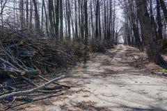 Guarnizione dei rami di albero ed assottigliare gli alberi in pianta suburbana immagine stock