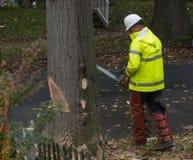 Guarnizione dell'albero e rimozione 2 immagine stock