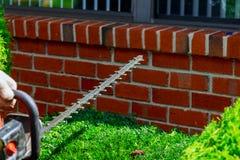 Guarnizione della barriera, impianti in un giardino Giardiniere con gli strumenti di giardino del professionista sul lavoro Immagini Stock