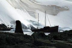 Guarnizione di pelliccia davanti ad un naufragio in Antartide fotografie stock libere da diritti
